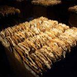 楮、陶土、サイザル麻、竹を固めて、空間に設置 1991 京都市四条ギャラリー